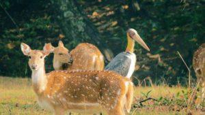 wildlife parks in India.