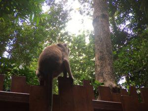 Monkey at Thailand beaches.