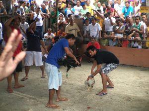 Visit Cebu: Cockfight