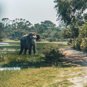 Nature Park in Sri Lanka
