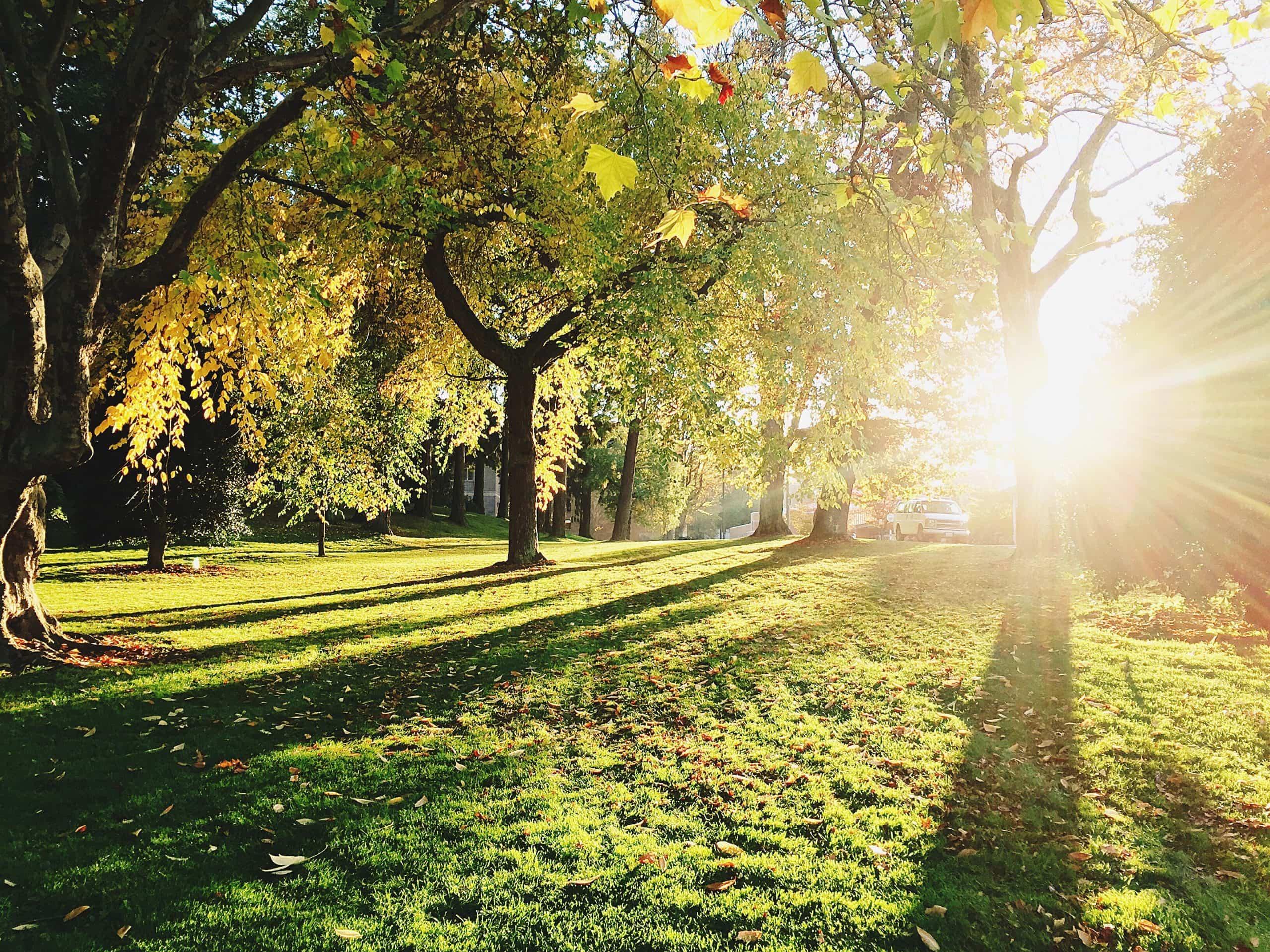Alamillo Park