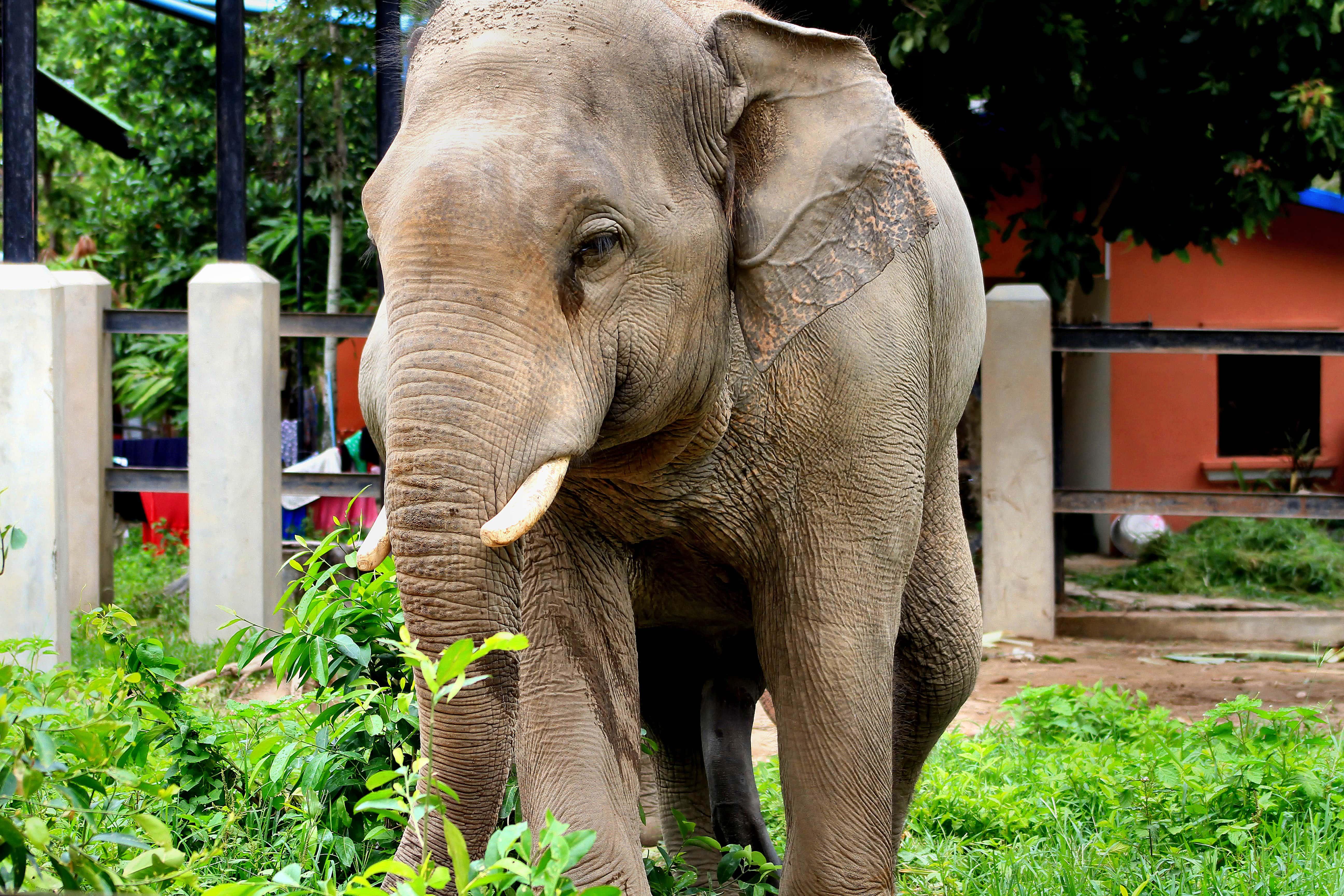 Cambodia Tourist Spots, Phnom Tamao Wild Center