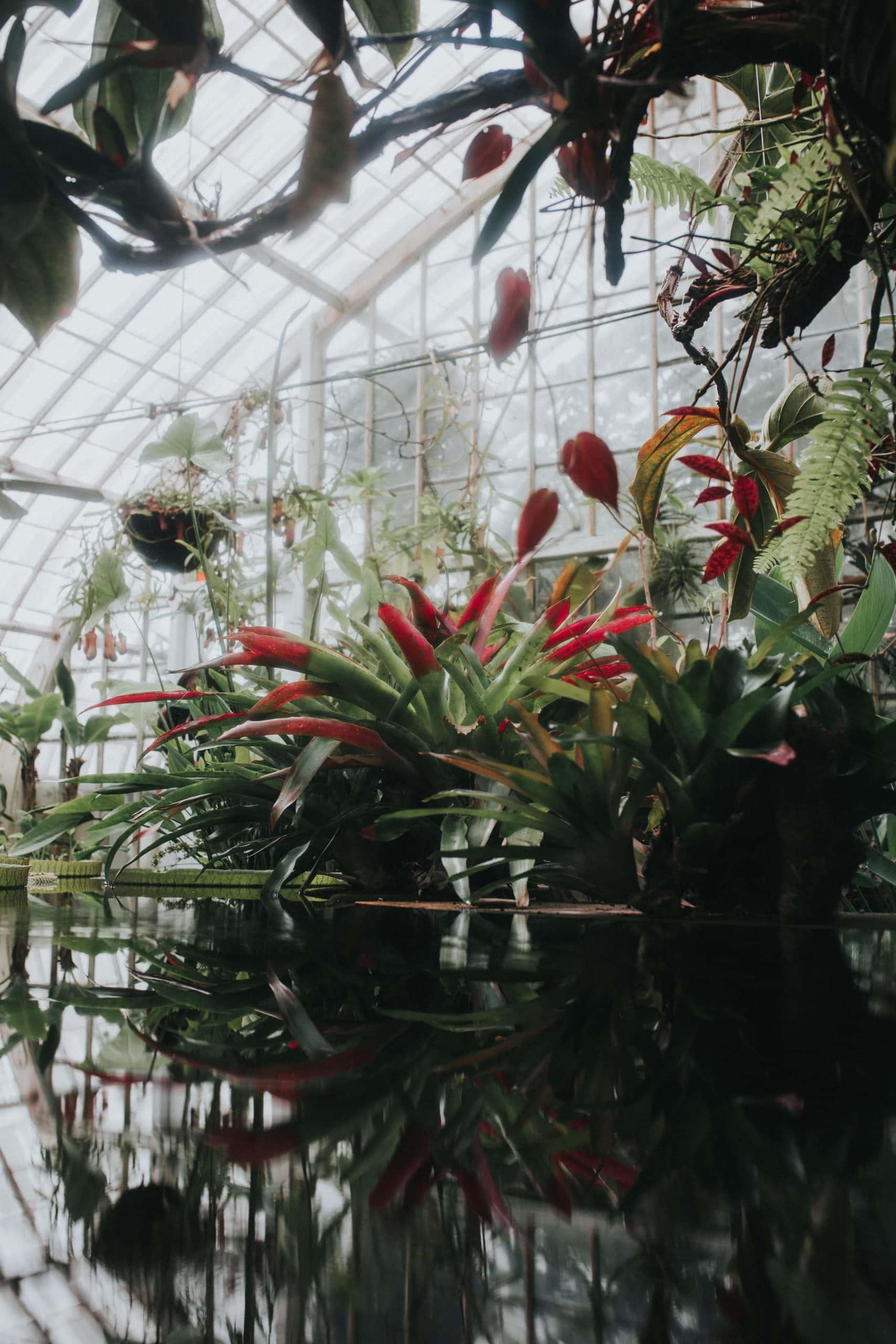 things to do in La Union, La Union tourist spots, La Union Botanical Garden,