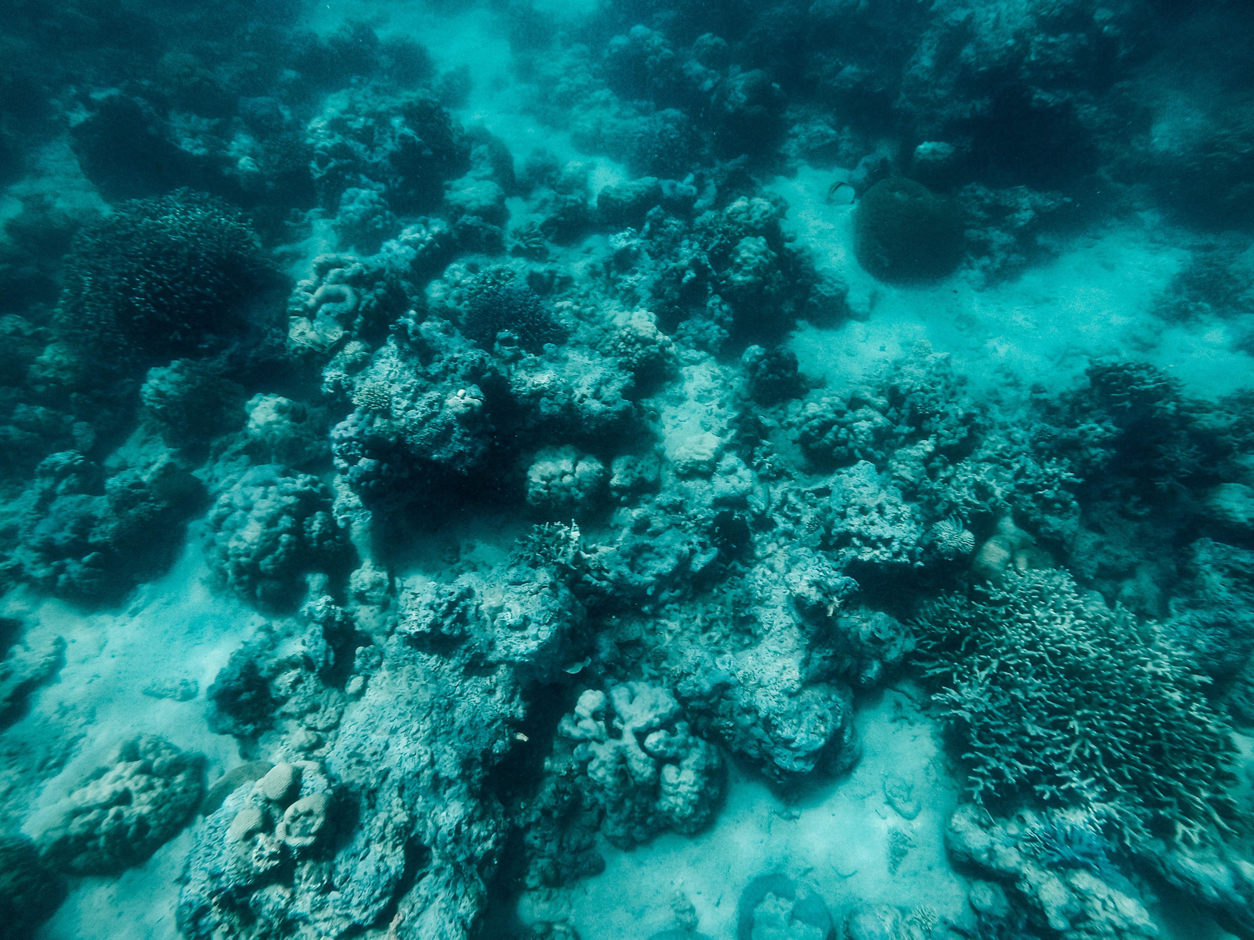 How to get to Carabao Island, Carabao Island travel guide, what to do in Carabao Island, Carabao Island, snorkeling in Carabao Island
