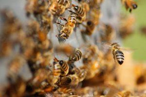 Milea Bee Farm, Batangas tourist spots