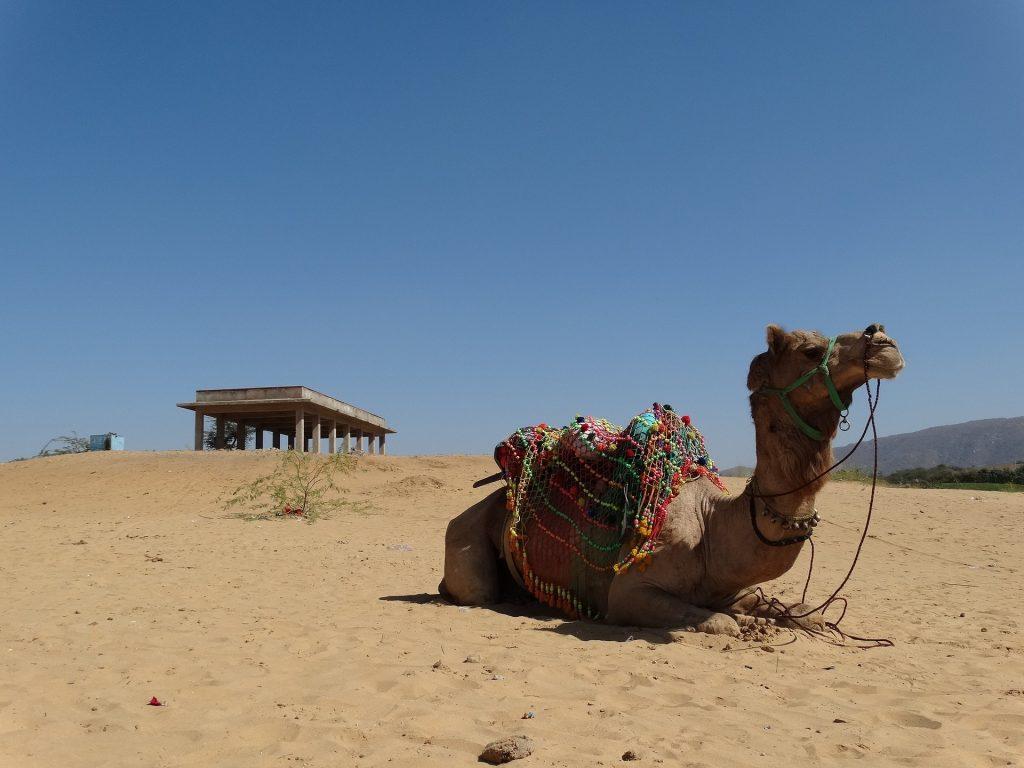 things to do in Pushkar, Pushkar travel guide, camel fair