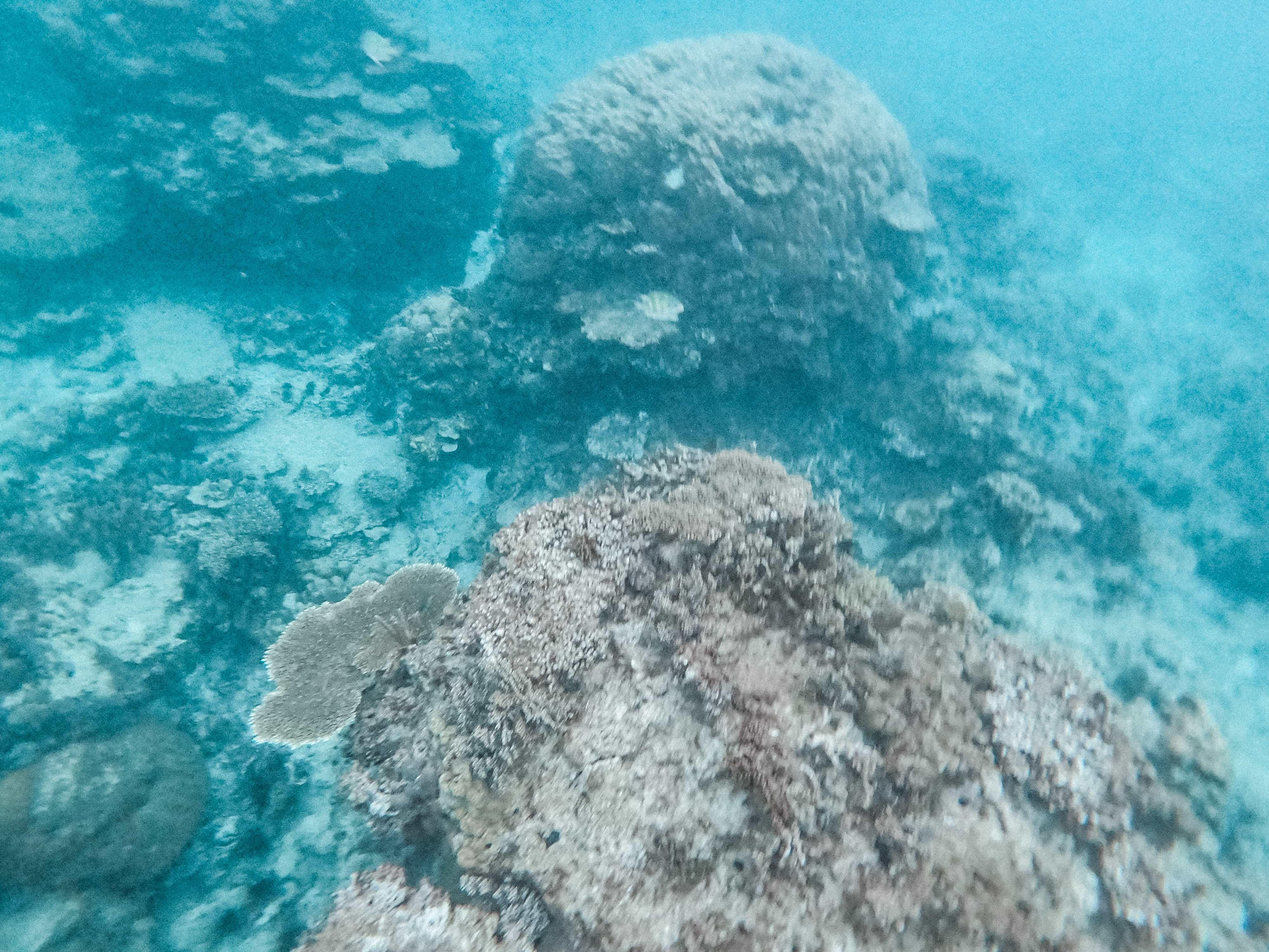 Calaguas Island itinerary, snorkeling in Calaguas Island