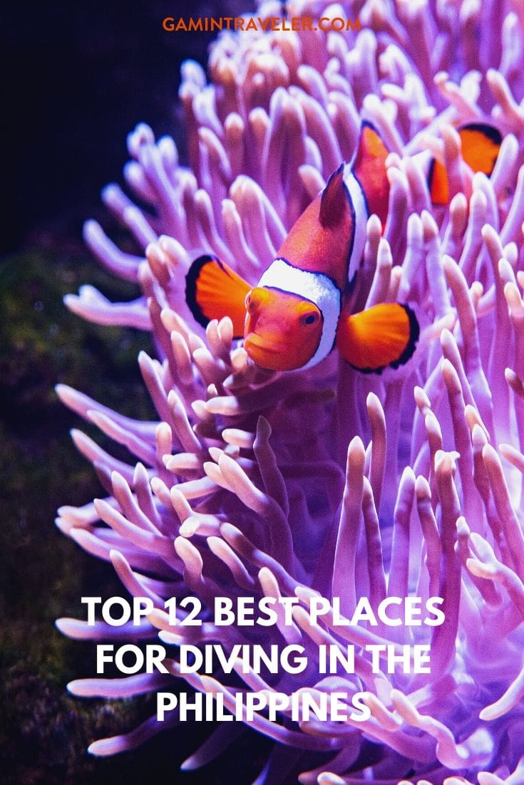 Best Places For Diving in the Philippines