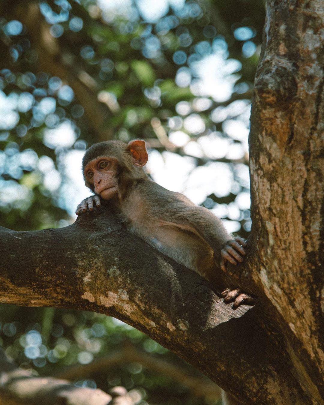 Things to do in Sanya, Sanya travel guide,, Monkey Island