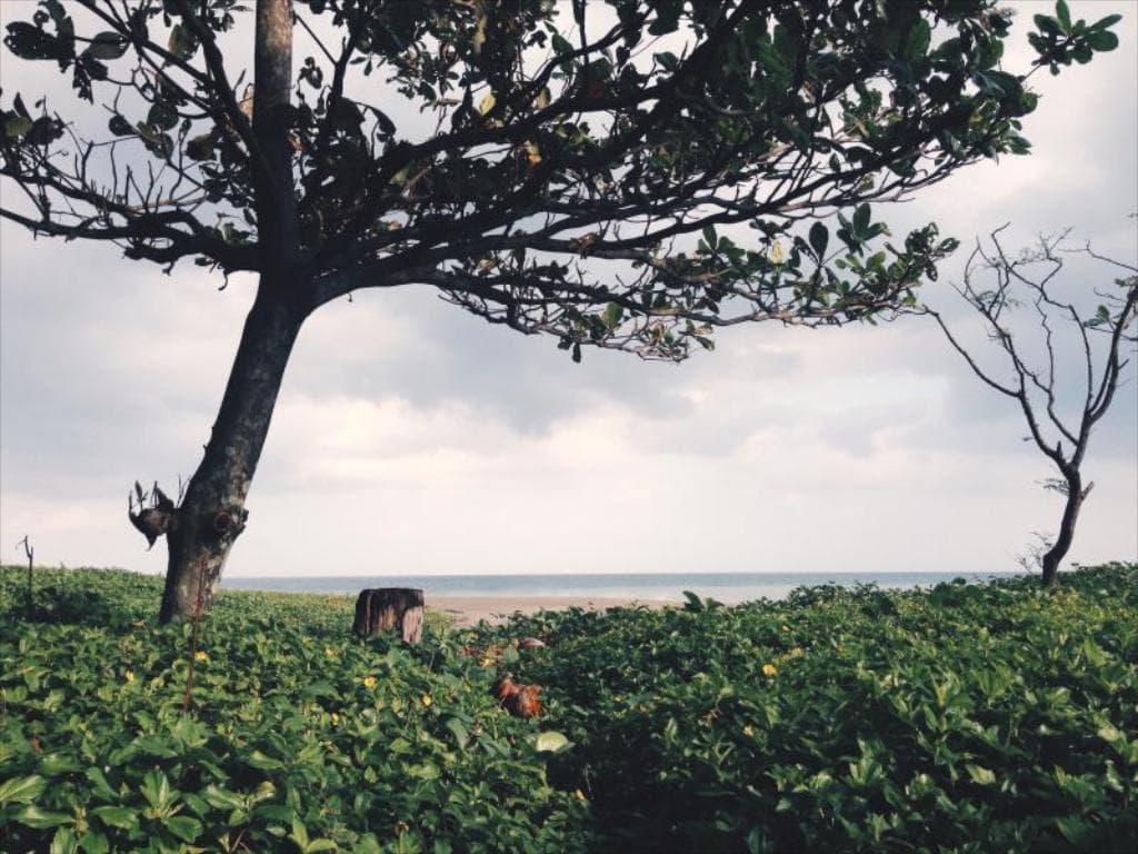 Pannzian Beach Resort, beach resorts in Pagudpud, resorts in Pagudpud, where to stay in Pagudpud