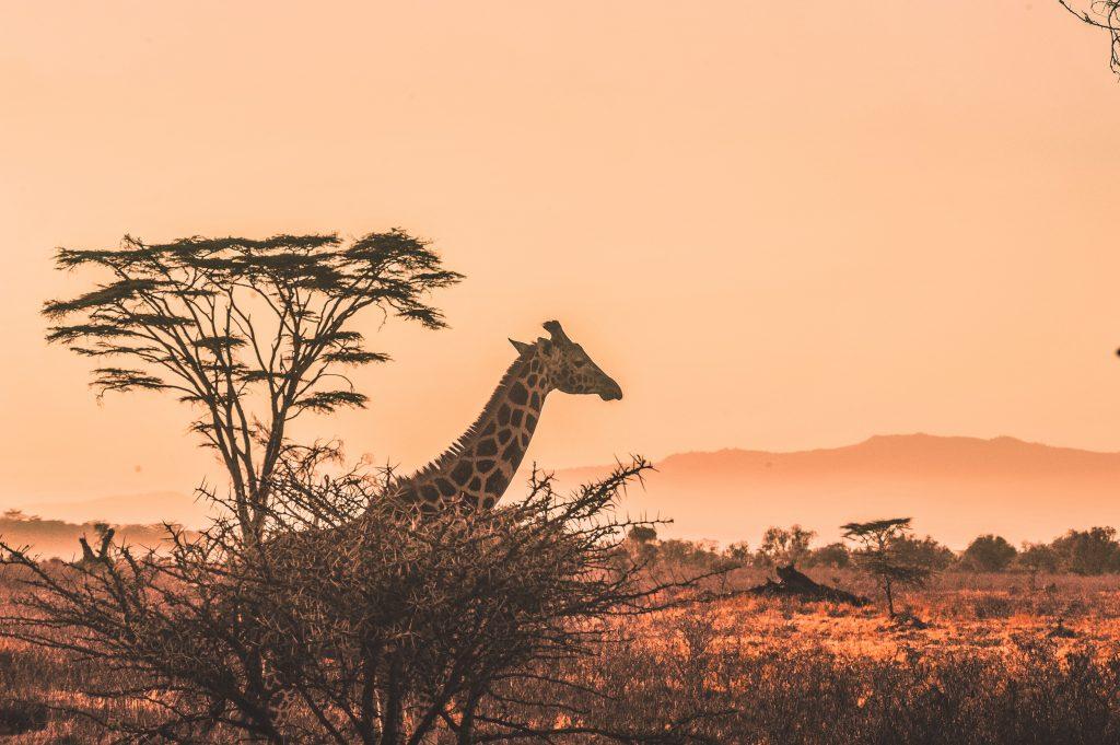 Kgalagadi Transfrontier Park, Botswana & South Africa