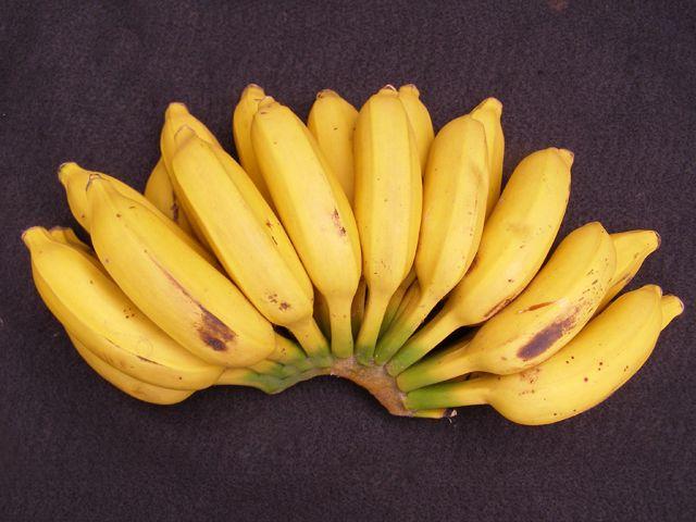 Latundan Banana, national fruit of the philippines, philippine fruits, filipino fruits, fruits in the philippines