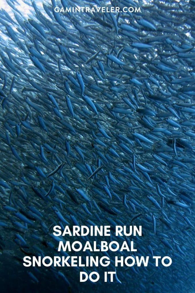 moalboal sardines, moalboal sardine run, sardine run moalboal, moalboal sardine run
