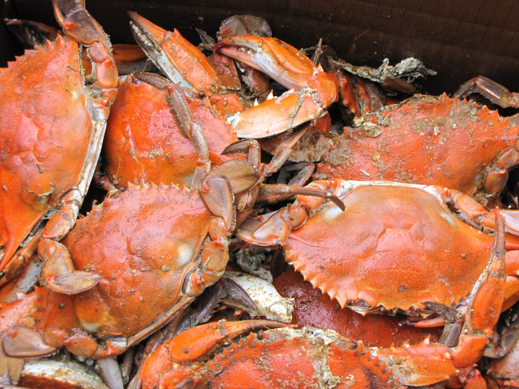 Crab And Belly, restaurants in subic, where to eat in subic, subic restaurants