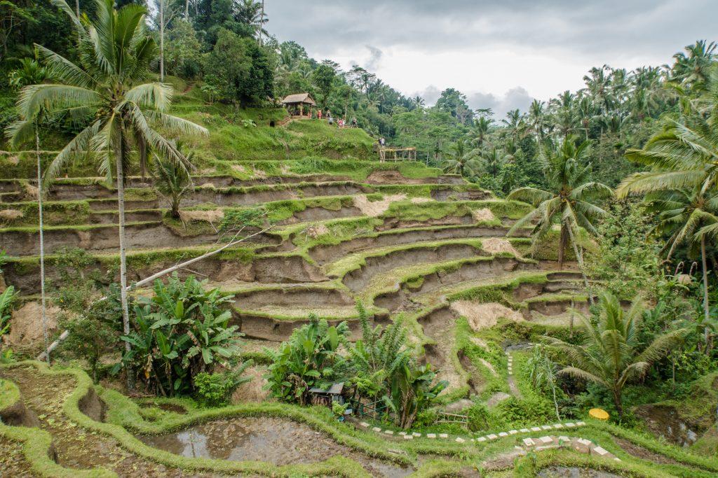 tegallalang bali, Ubud itinerary