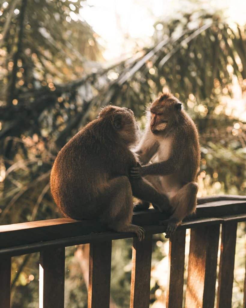 Moneky forest, Kecak dance, Ubud itinerary