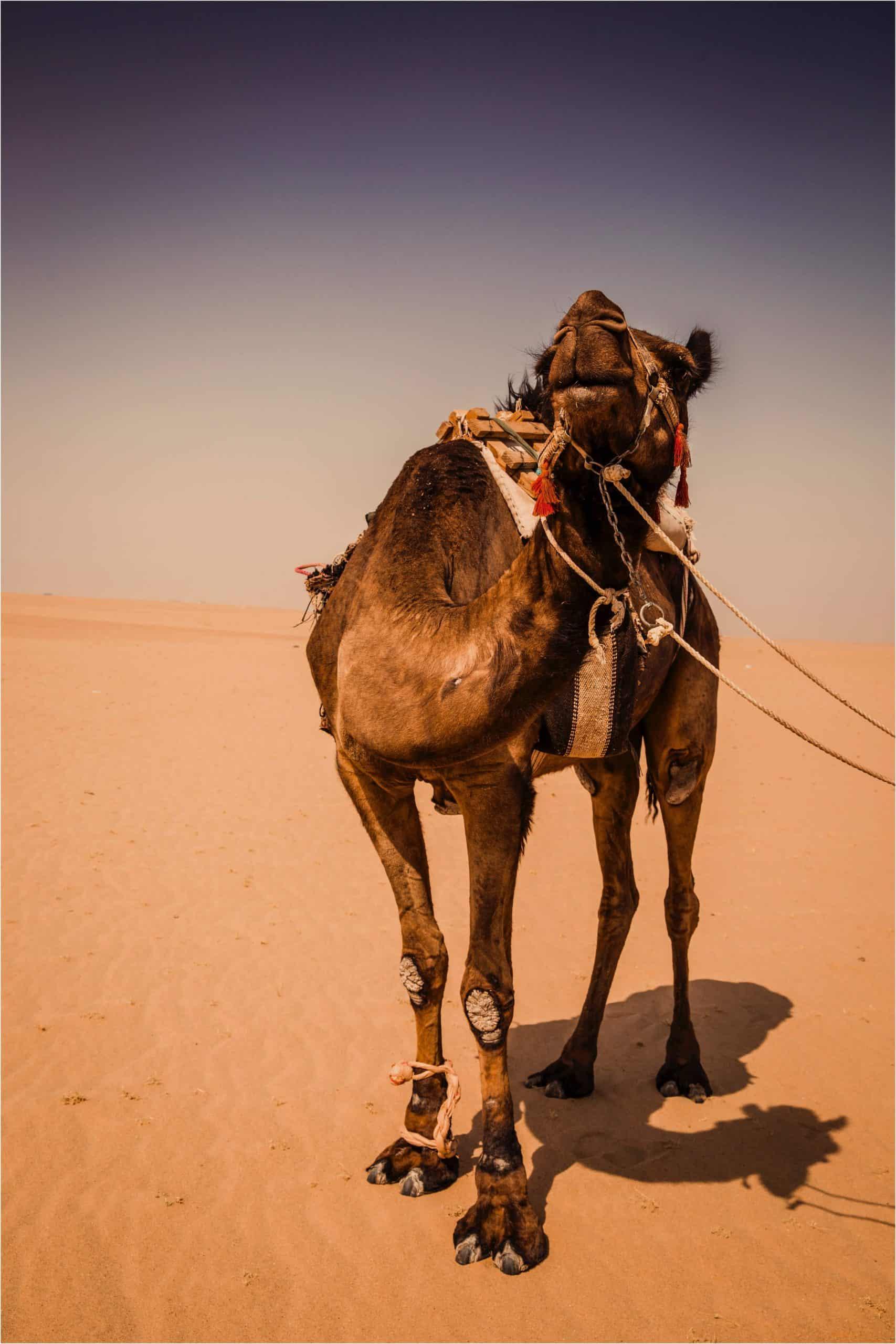 kuwait sim card for tourist, sim card kuwait, kuwait sim card, kuwait tourist sim card, kuwait prepaid sim card,