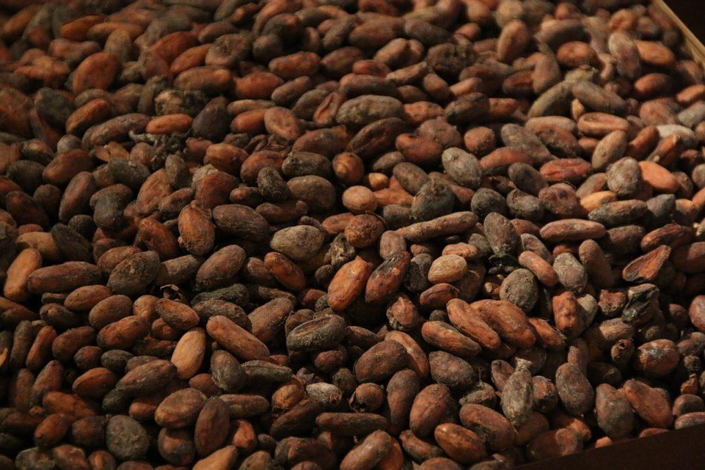 Cacao in Ecuador