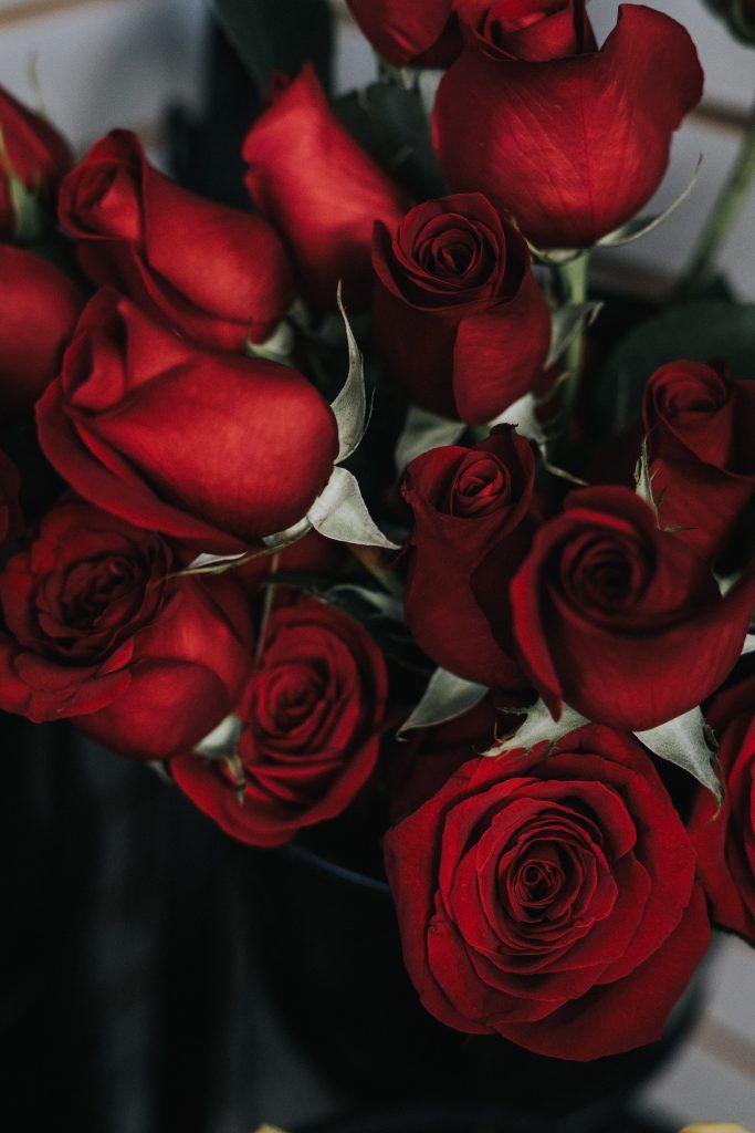 Roses in Ecuador,