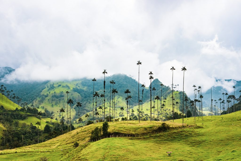 Colombia travel tips, things to know before visiting Colombia, facts about Colombia, Salento, Valle de Cocora