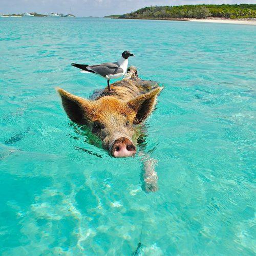 Bahamas Travel Tips, things to know before visiting Bahamas, facts about Bahamas, Exuma Cays Land and Sea Park