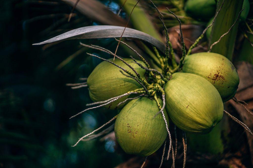 Bahamas Travel Tips, things to know before visiting Bahamas, facts about Bahamas, Coconut