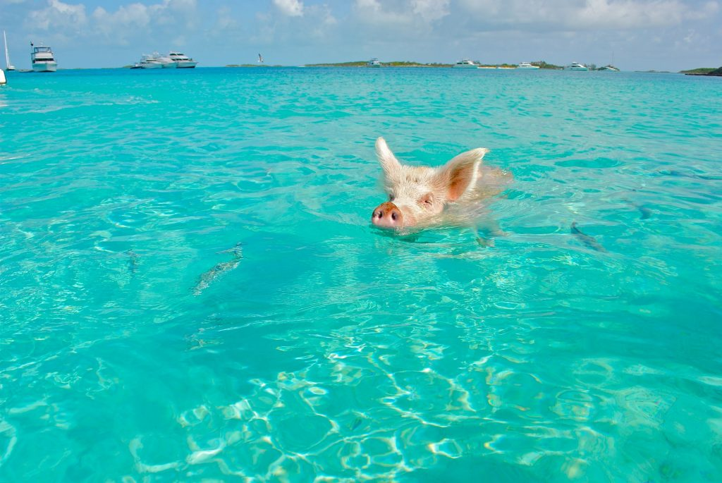 Bahamas Travel Tips, things to know before visiting Bahamas, facts about Bahamas, Swimming With The Pigs in Bahamas