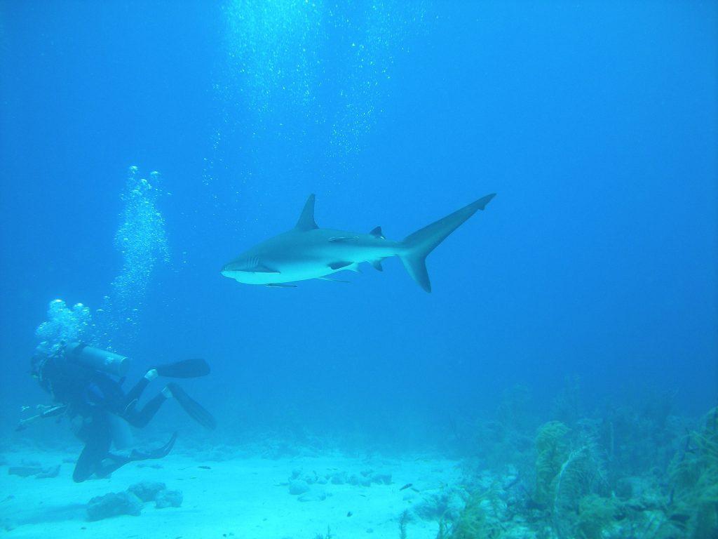 Bahamas Travel Tips, things to know before visiting Bahamas, facts about Bahamas, Diving in Bahamas