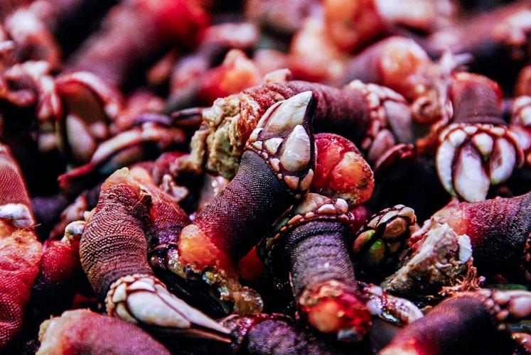 Percebes, Portuguese Food, Portuguese cuisine, traditional Portuguese food, food in Portugal, Portuguese dishes
